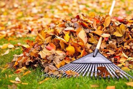 Pile of fall leaves with fan rake on lawn Banco de Imagens - 16419297