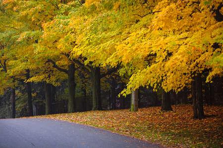 Autumn Straße mit Herbst Ahorn-Bäume zeigt bunte Laub. Toronto, Kanada. Standard-Bild - 16556838