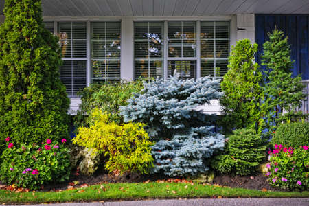 cedar tree: Beautiful garden with trees and flowers in front of windows at home
