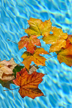 Fall leaves floating in swimming pool water Stock Photo - 16556729