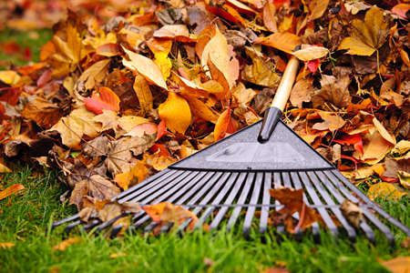 Pile de feuilles d'automne avec le râteau sur la pelouse du ventilateur Banque d'images