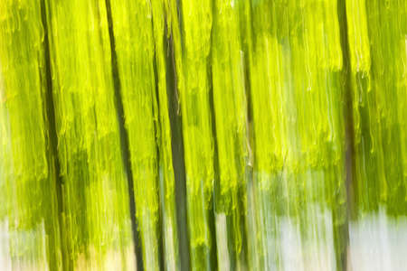 Abstract background of green forest produced by in-camera motion blur Stock Photo - 16556726