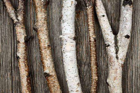 Birch tree trunks and branches on natural wood background Stock Photo - 16784860