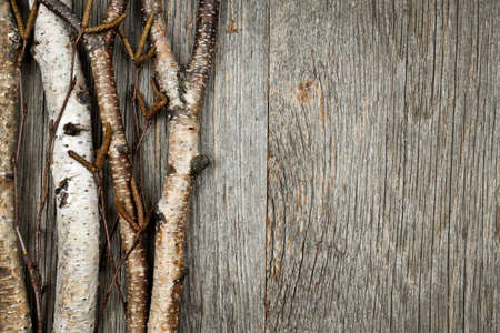 birchbark: Birch tree trunks and branches on natural wood background with copy space