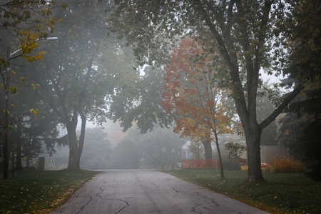 suburban: Fall trees on quiet foggy suburban street in Toronto, Canada. Stock Photo