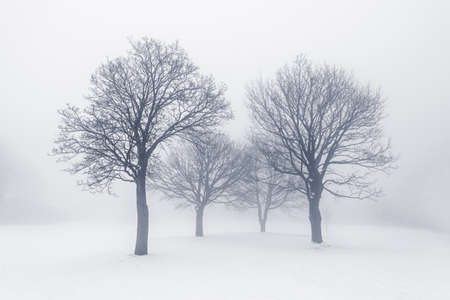 Winter scene of leafless trees in fog photo