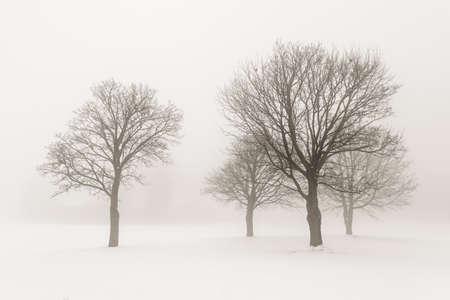 霧のセピア色のトーンで葉のない木の冬景色
