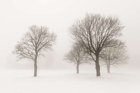 Winter scene of leafless trees in fog sepia tone photo