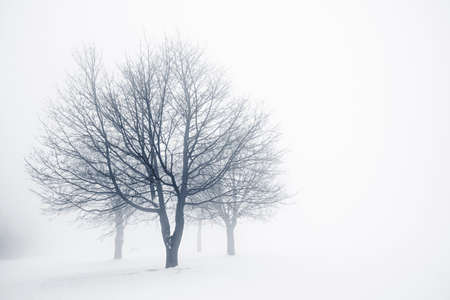 fog white: Winter scene of leafless trees in fog with copy space Stock Photo