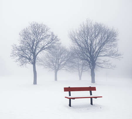 Foggy winter scene with leafless trees and red park bench photo