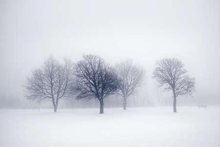 Scène van de winter van kale bomen in de mist