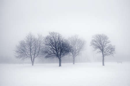 Winter scene of leafless trees in fog Stock Photo - 17664263