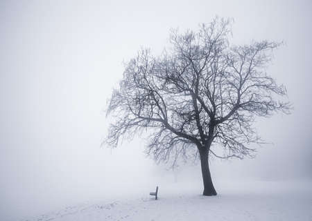 Winter scene of leafless tree and park bench in fog photo