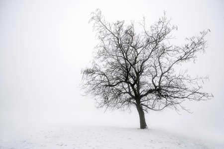 arboles blanco y negro: Escena de invierno brumoso del árbol sin hojas en la niebla