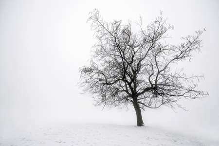 Foggy winter scene of single leafless tree in fog photo