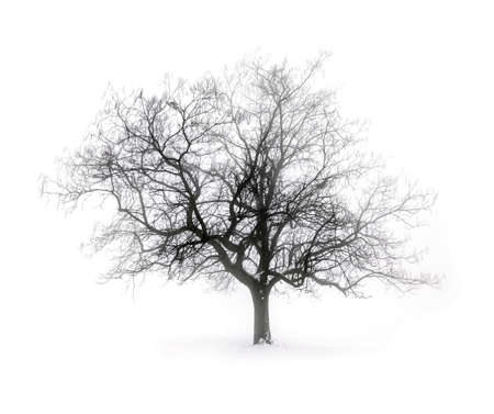 Single leafless tree in winter fog on white snow background photo