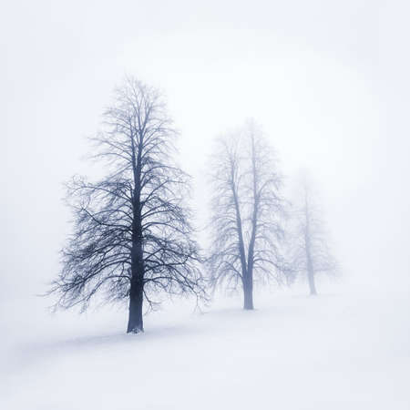 Foggy moody winter scene with leafless trees Stock Photo - 17664246