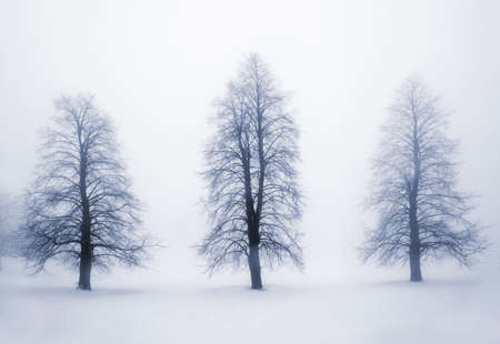 Foggy moody winter scene with leafless trees photo