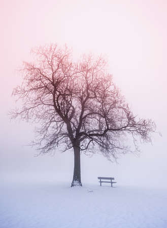 Foggy winter sunrise scene with leafless tree and park bench photo