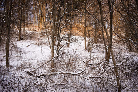 Winter landscape of trees and plants in forest with snow Stock Photo - 17664316