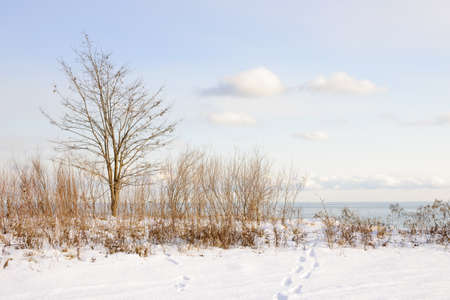 understated: Snowy shore of lake Ontario in Sylvan park Toronto