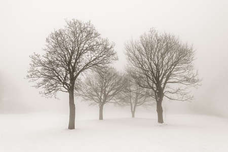 Winter scene of leafless trees in fog sepia tone Stock Photo - 18049373