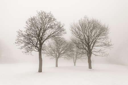 Winter scene of leafless trees in fog sepia tone Stock Photo - 18049373