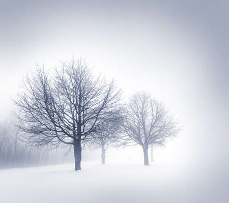 Winter scene of leafless trees in fog with copy space photo