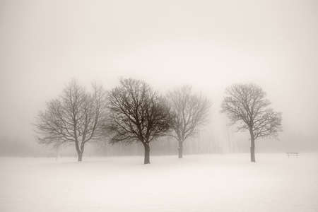 Foggy winter scene with leafless trees in sepia photo