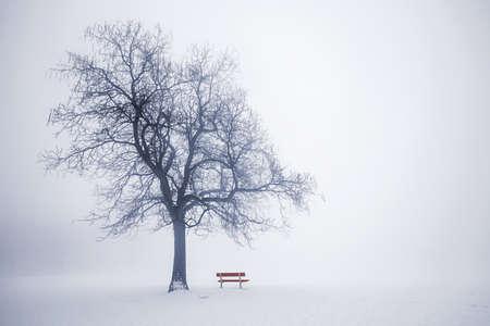 葉のない木と赤い公園のベンチの霧に霧、冬のシーン 写真素材 - 18049388