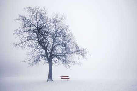 Foggy winterscène met bladerloze boom en rode bankje in het park in de mist