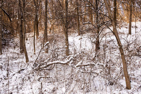Winter landscape of trees and plants in forest with snow Stock Photo - 18048926