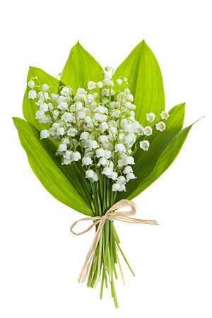 muguet fleur: Lily of the valley bouquet de fleurs isol� sur fond blanc