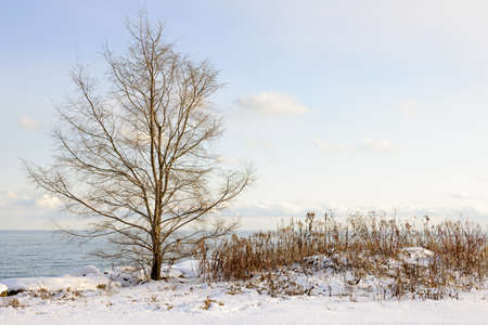 understated: Snowy winter shore of lake Ontario in Sylvan park Toronto