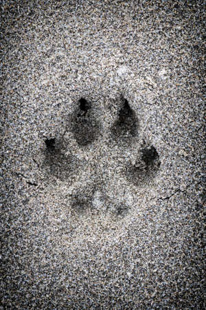 Closeup of dog paw print in sand Stock Photo - 18341820