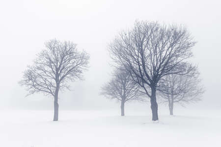 Winter scene of leafless trees in fog Stock Photo - 18654234