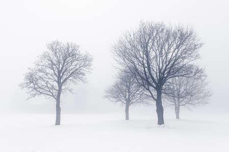 Winter scene of leafless trees in fog Stock Photo - 18654234
