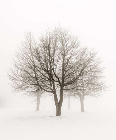 Winter scene of leafless trees in fog sepia tone Stock Photo - 18654230