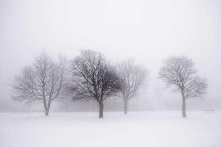 Escena de invierno brumoso con los árboles sin hojas Foto de archivo