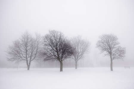 Mistige winters tafereel met kale bomen Stockfoto