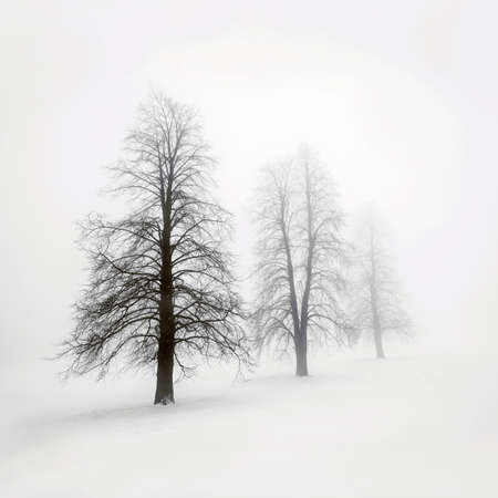 natural  moody: Foggy moody winter scene with leafless trees