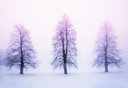 Foggy winter sunrise scene with three leafless trees photo