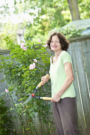 pruning shears: Happy senior woman gardening and pruning rose bush with clippers