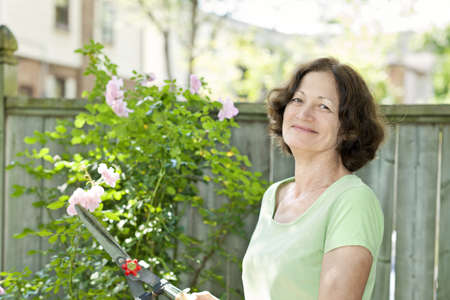 clippers: Happy senior woman enjoying gardening and pruning rose bush with clippers