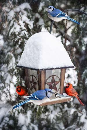 冬はブルージェイズと枢機卿の鳥の送り装置 写真素材