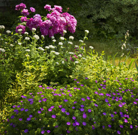 Beautiful summer garden with various plants and flowers blooming basking in sunshine photo