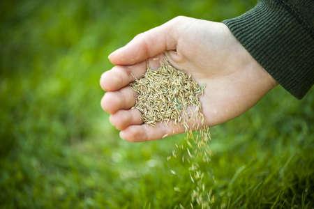 Hand planten graszaad voor doorzaaien groen gazon zorg Stockfoto
