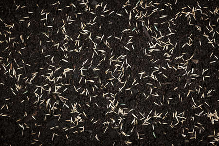 Grass seeds scattered on fertile soil from above photo