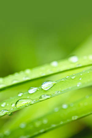 Macro closeup of water drops on grass blades with green copy space Stock Photo - 19382511