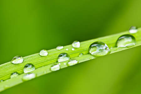 Macro closeup of water drops on green grass blade Stock Photo - 19382507